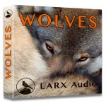 Wolves sound effects library product cover photo